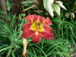Floral Beauty as God's divine love